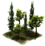 Group of Trees