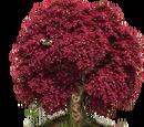 Baum der Ewigen Liebe