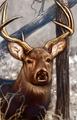 Deer portrait NWN.png