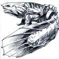 Bichir-2e.png
