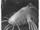 Stalking catfish