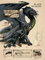 Black dragon anatomy - Lars Grant-West.jpg