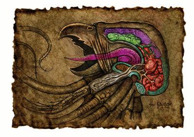 grell anatomy Anatomia grell - by E. Cox Signori della Follia - Il Libro delle Aberrazioni (2005) © Wizards of the Coast & Hasbro