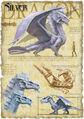 Silver dragon anatomy - Richard Sardinha.jpg