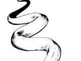 Constrictor snake
