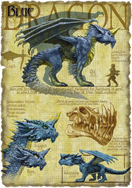 Blue dragon anatomy - Richard Sardinha