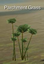 PlantParchmentGrass