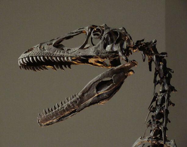 File:Deinonychus Skull.jpg