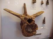 Vértebra megalosaurus