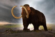 1280px-Woolly mammoth model Royal BC Museum in Victoria