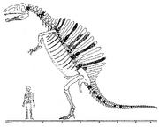 Monografía Spinosaurus