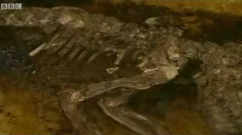 The Missing Link (2) Most Complete Fossil In Primate Evolution
