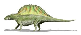 Ctenosauriscus   Fossil Wiki   Fandom