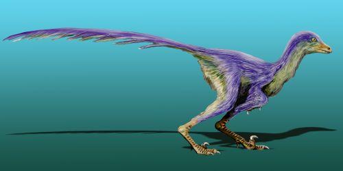File:Tianyuraptor NT.jpg