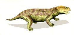 Eodicynodon BW