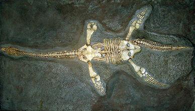 Plesiosaur cast arp