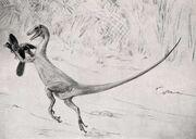 Ornitholestes