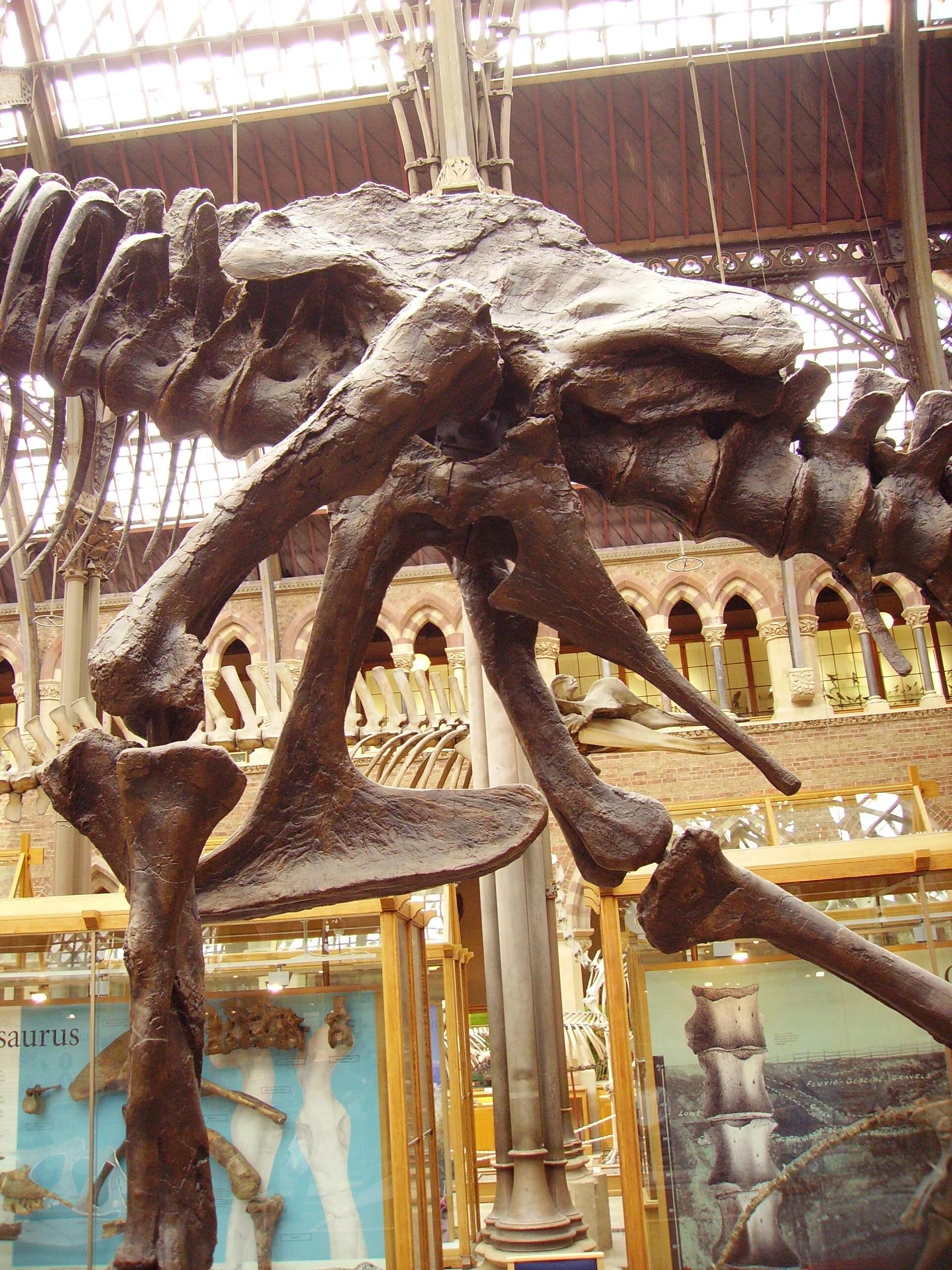Saurischia | Fossil Wiki | FANDOM powered by Wikia