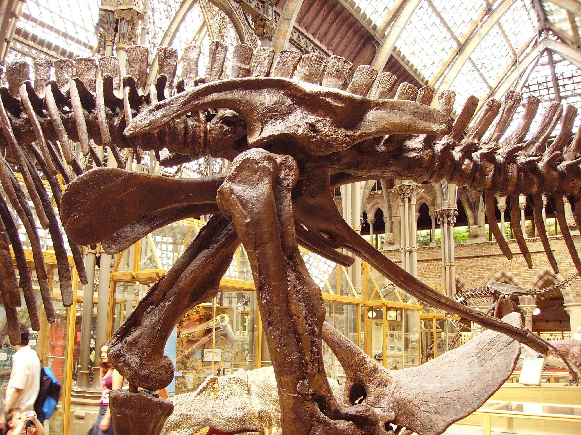 Ornithischia | Fossil Wiki | FANDOM powered by Wikia