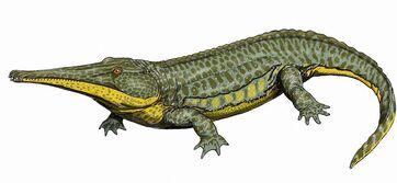 Platyoposaurus12DB