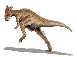 Dracorex BW