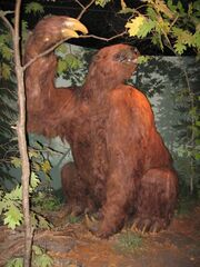 Giant ground sloth Iowa