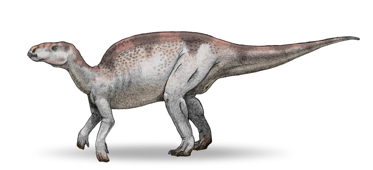 1966 in paleontology | Fossil Wiki | FANDOM powered by Wikia