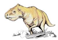 Prenoceratops dinosaur