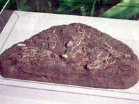 Hongshanosaurus houi 1