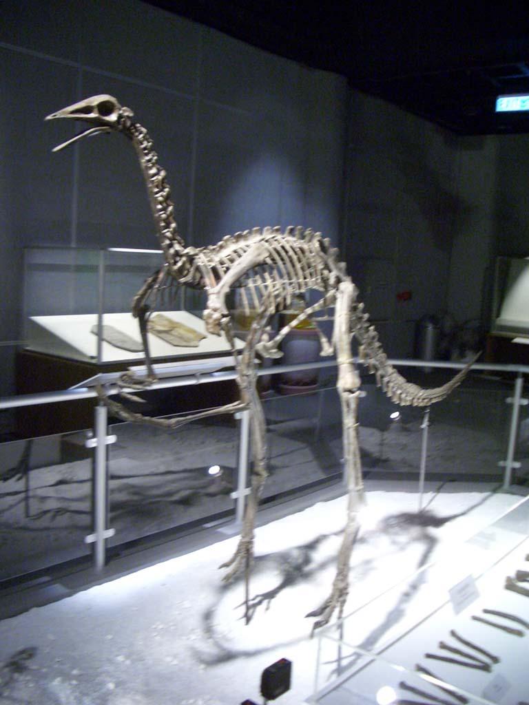 Archaeornithomimus | Fossil Wiki | FANDOM powered by Wikia