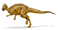 Zalmoxes dinosaur