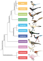 Maniraproriformes 1