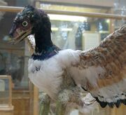 Archaeopteryx-model