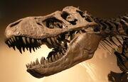 Palais de la Decouverte Tyrannosaurus rex p1050042
