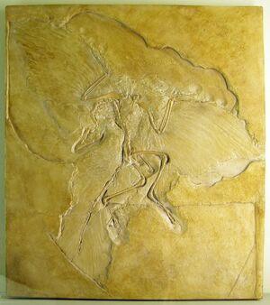 Naturkundemuseum Berlin - Archaeopteryx - Eichstätt