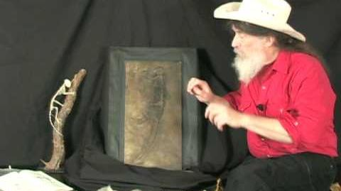 Famous Fossil (Ida)