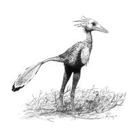 Sinornithoides-youngi jconway