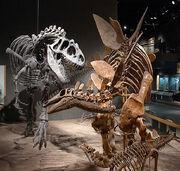 Dinosaurios DMSN