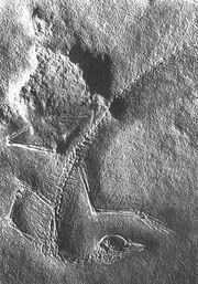 Cosesaurus1