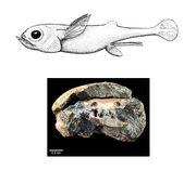 Oldest-brain-found big