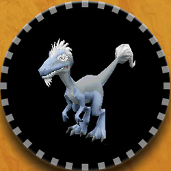 E-Raptor FFC