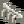 Grid Ribcage (Bone)