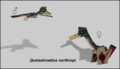 Quetzalcoatlus Preview