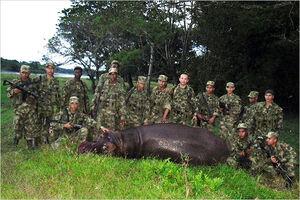 Colombian Dead Hippo