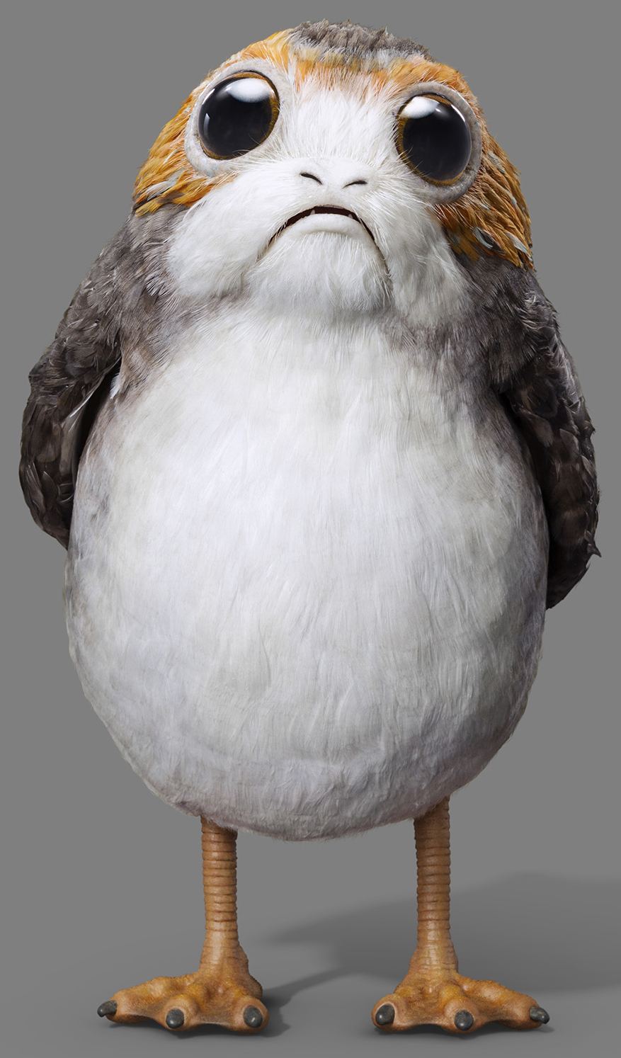 Porg star wars wiki fandom powered by wikia - Personnage de starwars ...