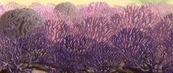 Corail terrestre de Rugosa