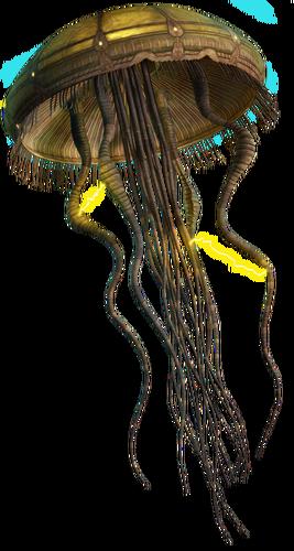 Méduse Hydroïde