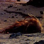Skitter des sables