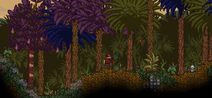Rainforestwiki