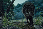 Black-Wolf-Hunting